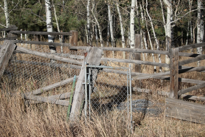lonely gate